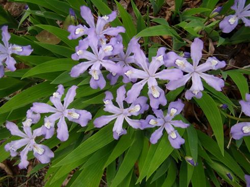 Eastern Pennsylvania Native Plant Garden May Home
