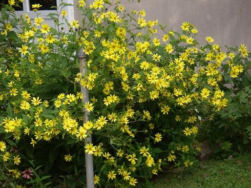 Eastern Pennsylvania Native Plant Garden